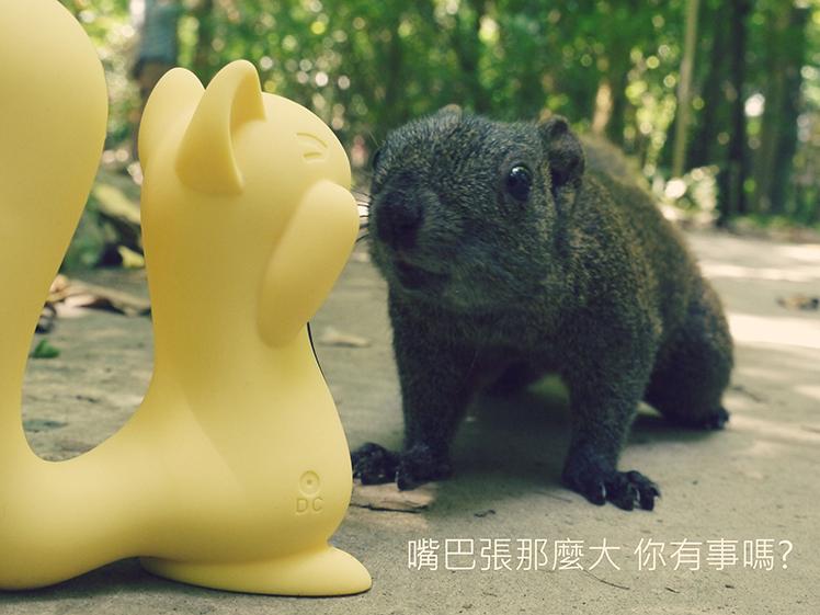 小松鼠 吸允 分享 心得 玩具 開箱
